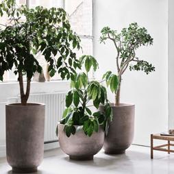 Pot et jardinière - Silvera